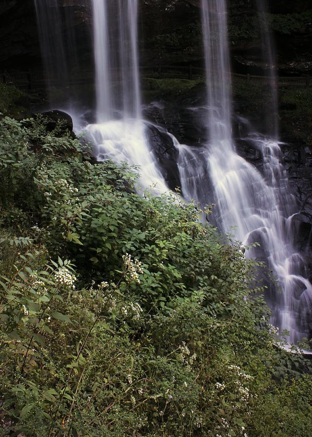 Waterfall Photograph - Waterfall Wildflowers by Samantha Michael