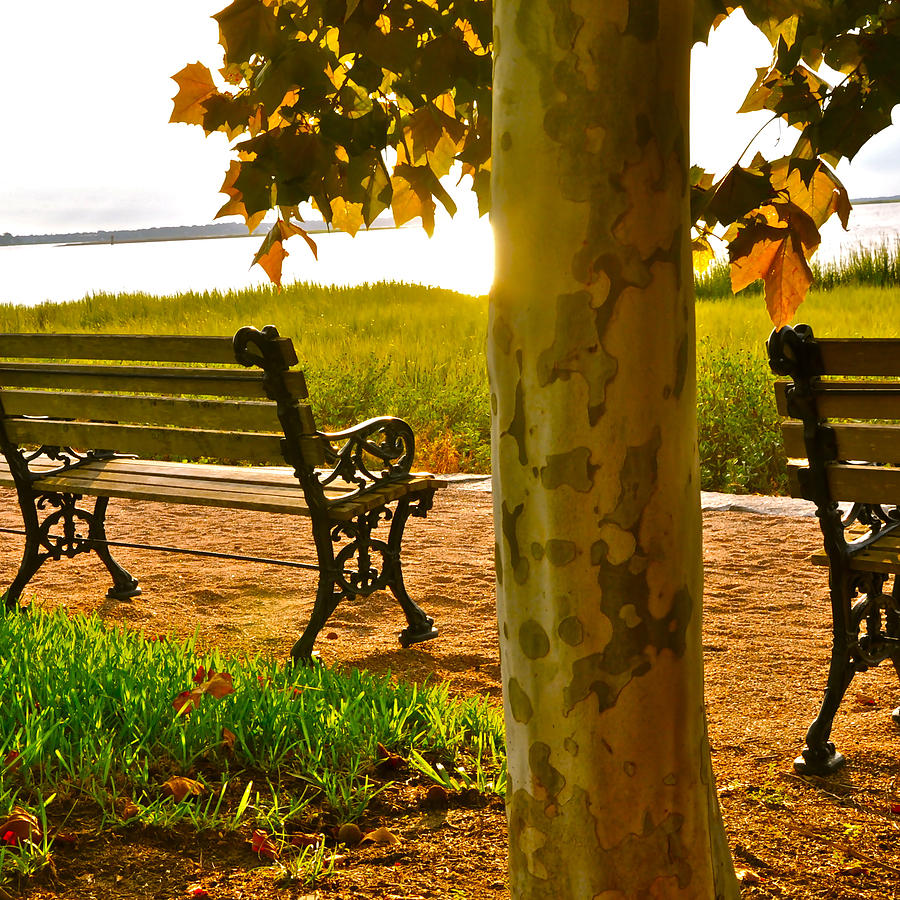 Photograph - Waterfront Park Bench by Lori Kesten