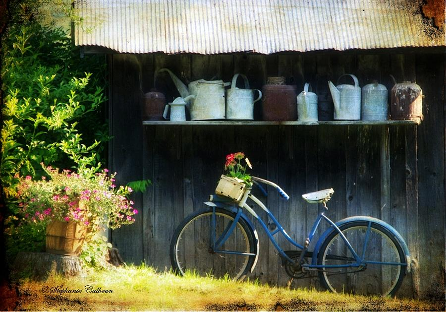 Old Bike Photograph - Watering Cans And Gerbera Daisies by Stephanie Calhoun