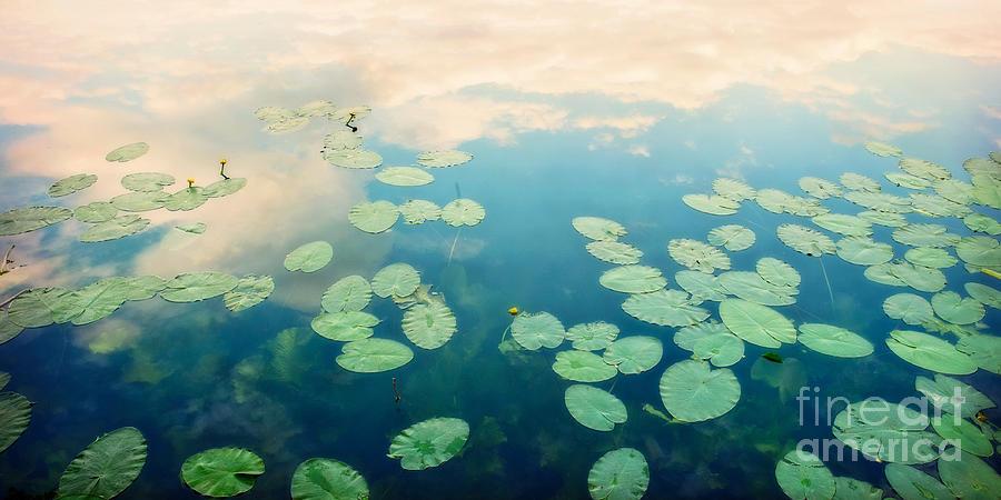 Pond Photograph - Waterlilies Home by Priska Wettstein