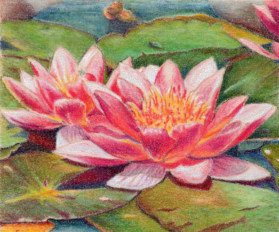 Waterlillies Painting - Waterlillies by Robynne Hardison