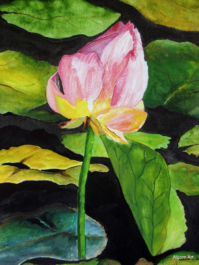 Pond Painting - Waterlily Watercolor by Brenda Alcorn