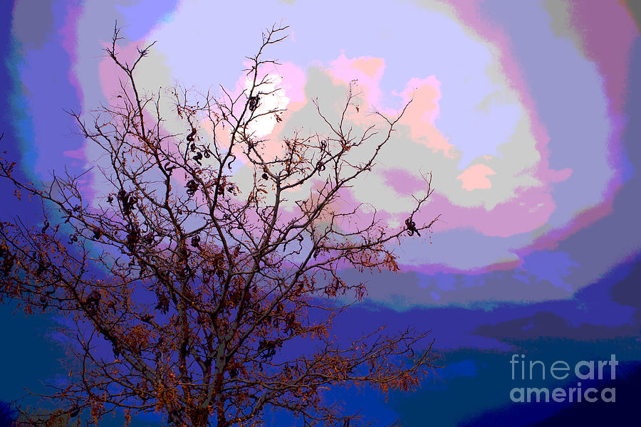 Tree Photograph - Watermelon Sky by Barbara Schultheis