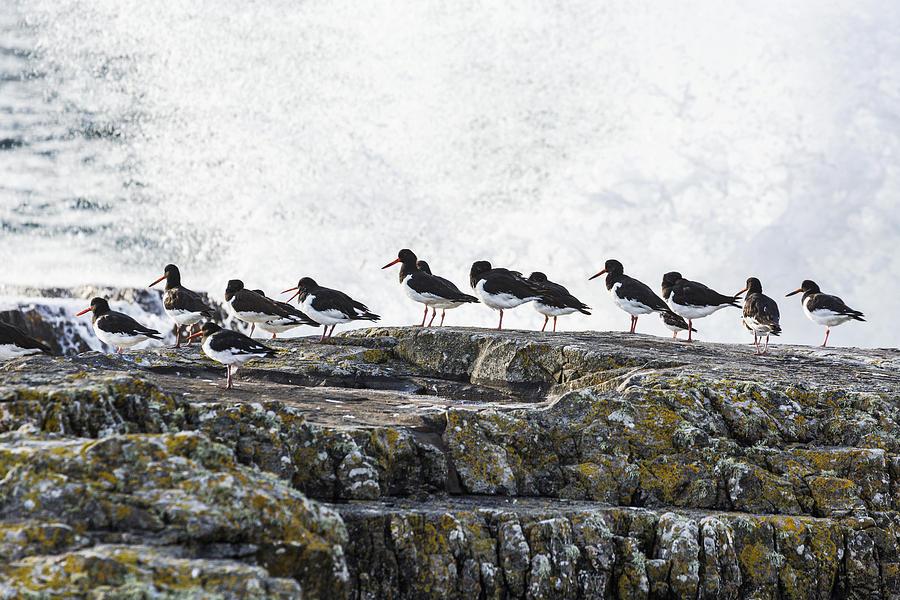 Wave Crashing Into Rocks With A Row Photograph