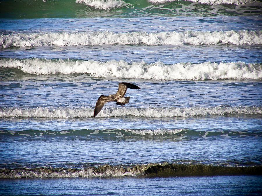 Bird Photograph - Wave Goodbye by Lee Malzard
