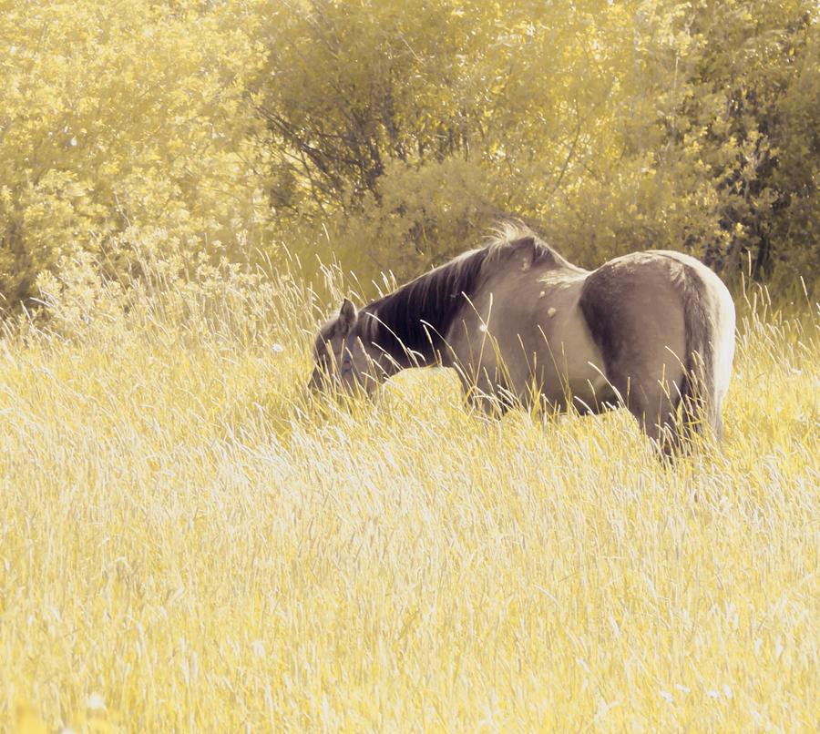 Horse Photograph - Way Back When by Scott Ballingall