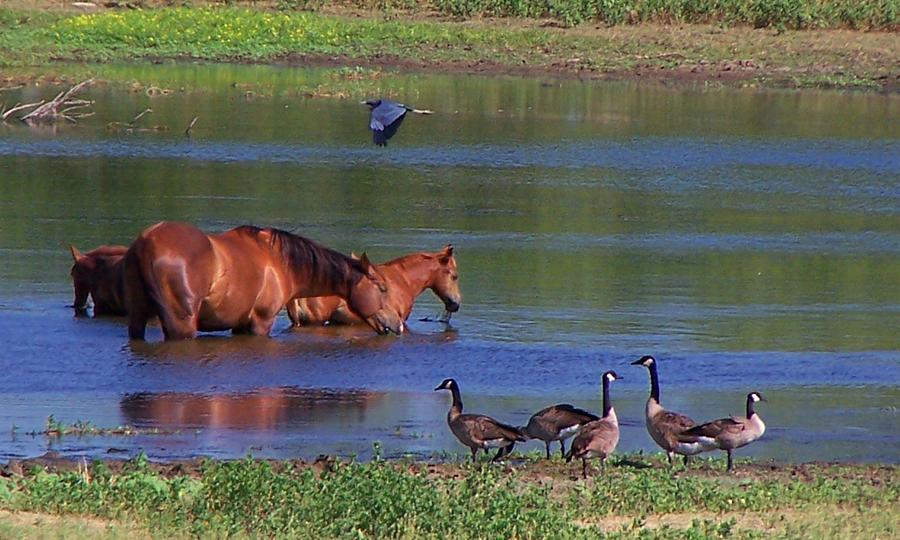 Horses Photograph - We Are All Friends Here. by Lilly King