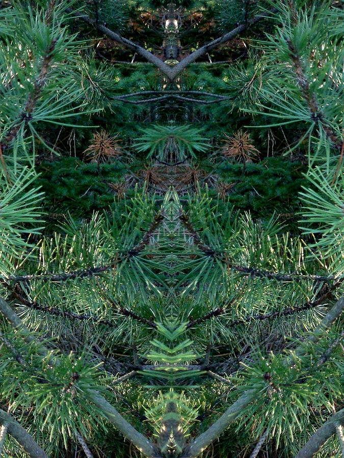 Nature Photograph - We Live In The Pines by Marilynne Bull