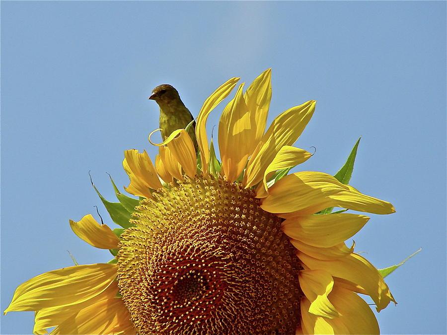 Flower Photograph - We Match by Diana Hatcher