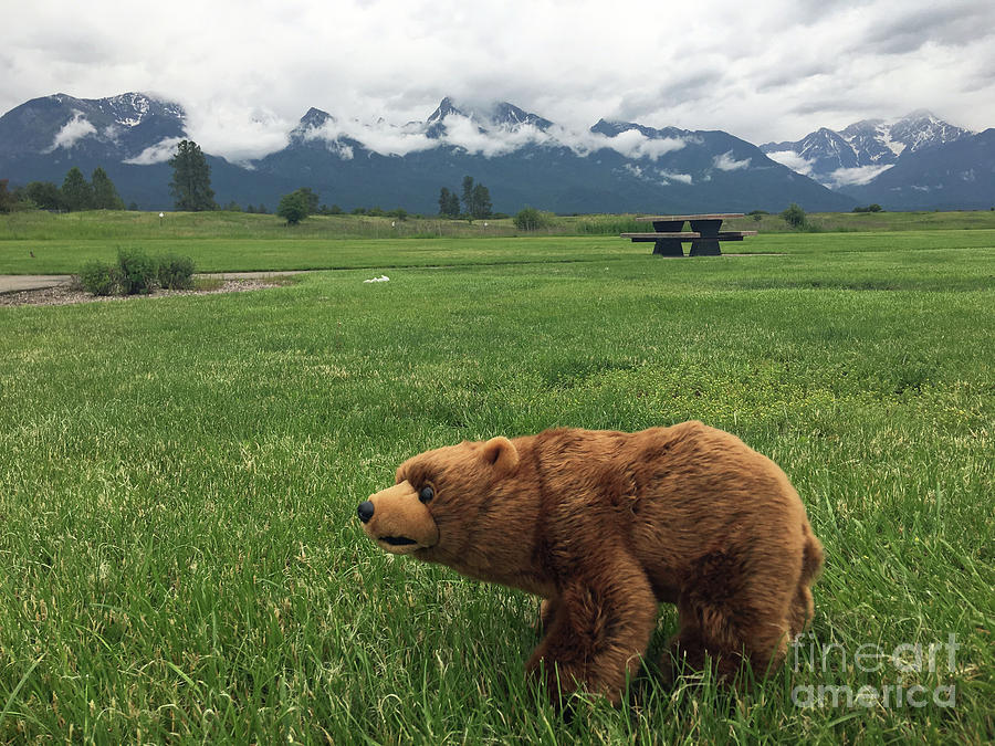 Bear Photograph - We Saw A Bear by Donlyn Arbuthnot