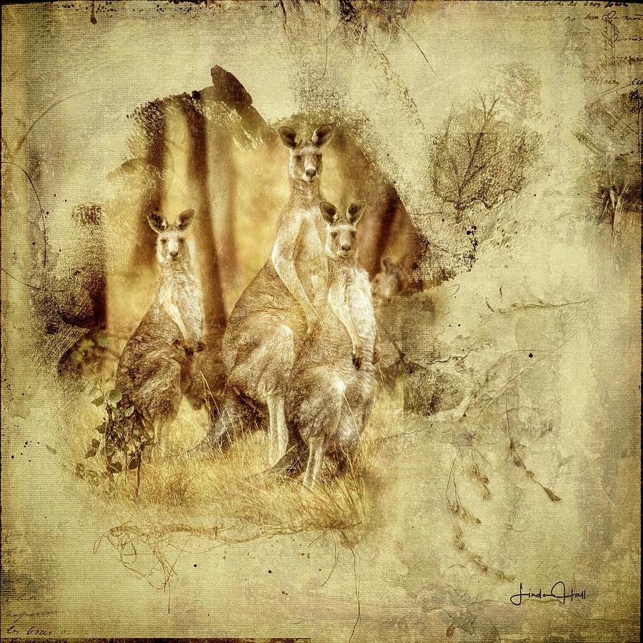 Australia Digital Art - We Three Roos by Linda Lee Hall