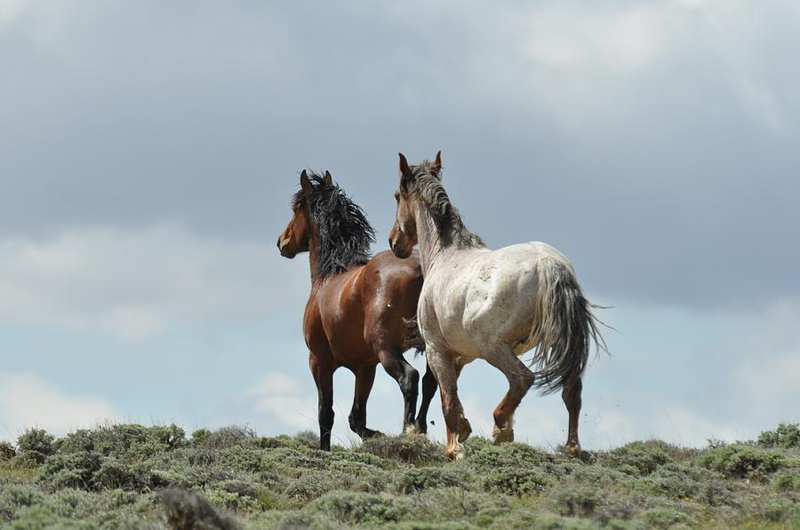 Wild Horses Photograph - We Will Be Over the Hill in a Few Seconds by Frank Madia