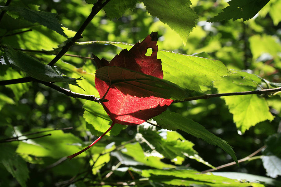 Foliage Photograph - Wealth by Alan Rutherford