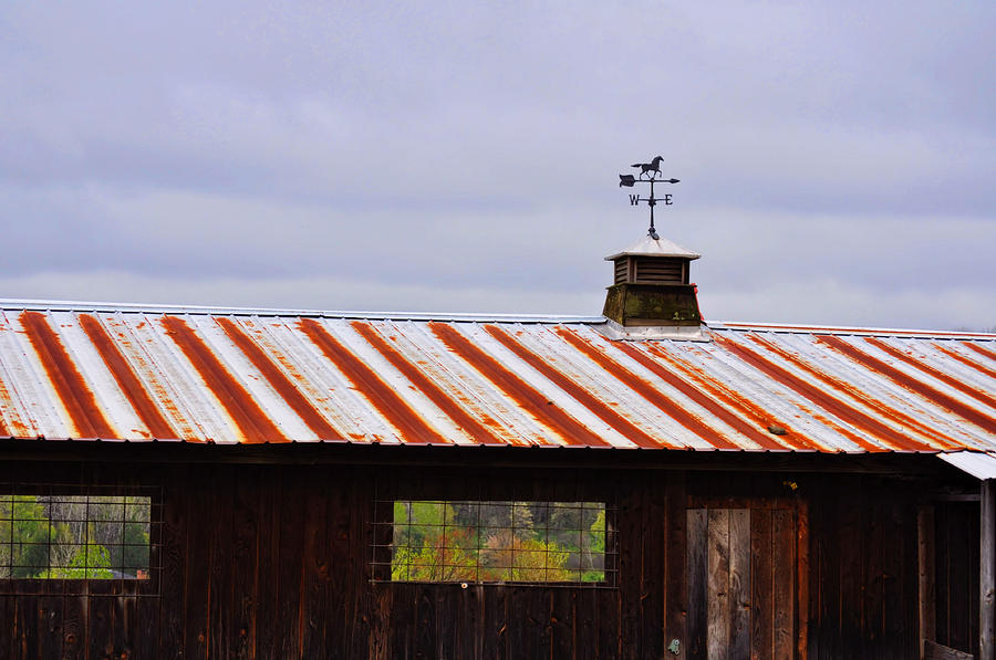 Horse Photograph - Weather Vane by JAMART Photography