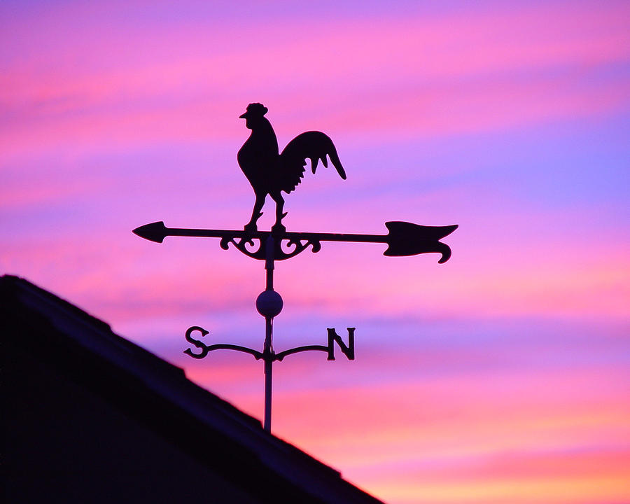 Weather Vane, Wendel's Cock by Jana Russon