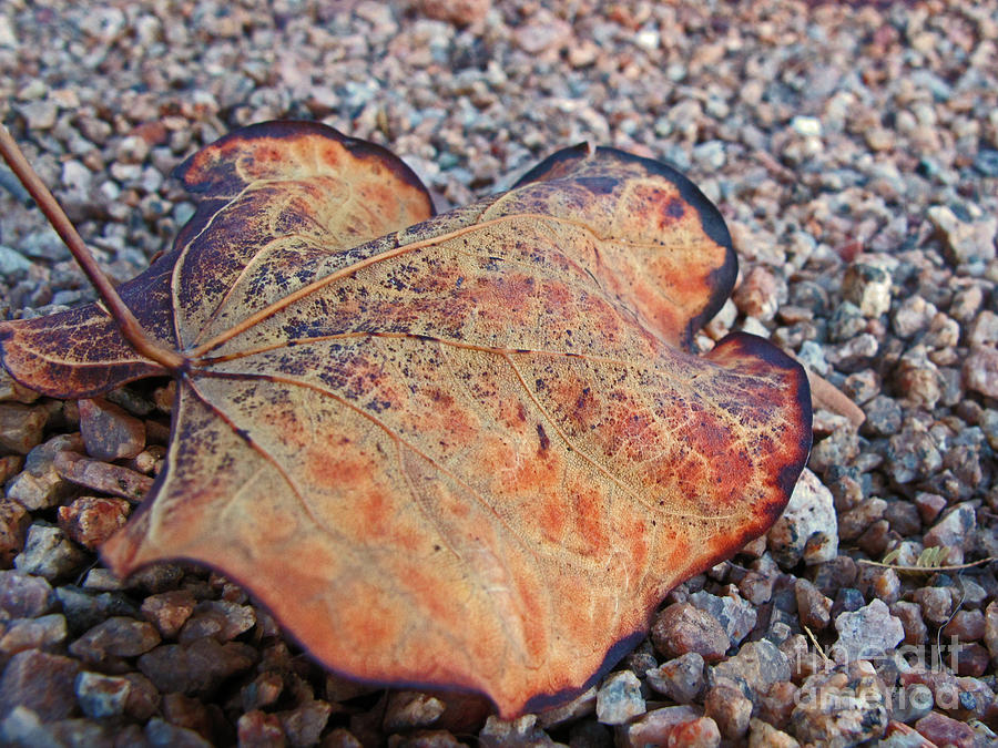 Weathered Leaf by Kelly Holm