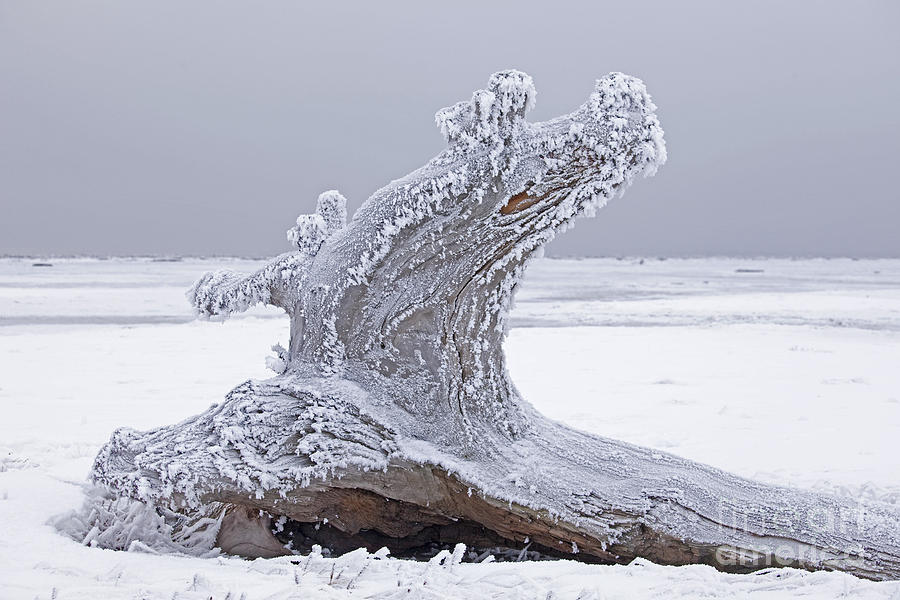 Tree Photograph - Weathered Tree Trunk In Winter by Tim Grams