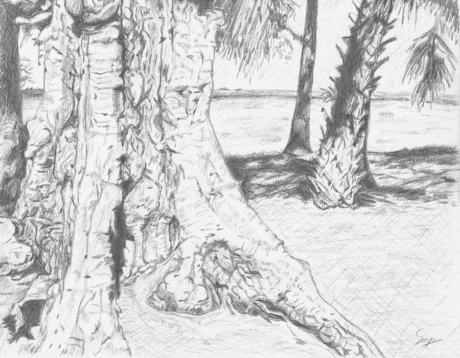 Sketch Drawing - Weathered Trees by Steven Powers SMP