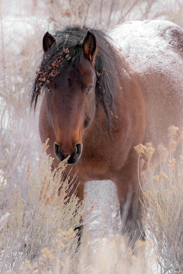 Animal Photograph - Weathering The Cold by Sandy Sisti