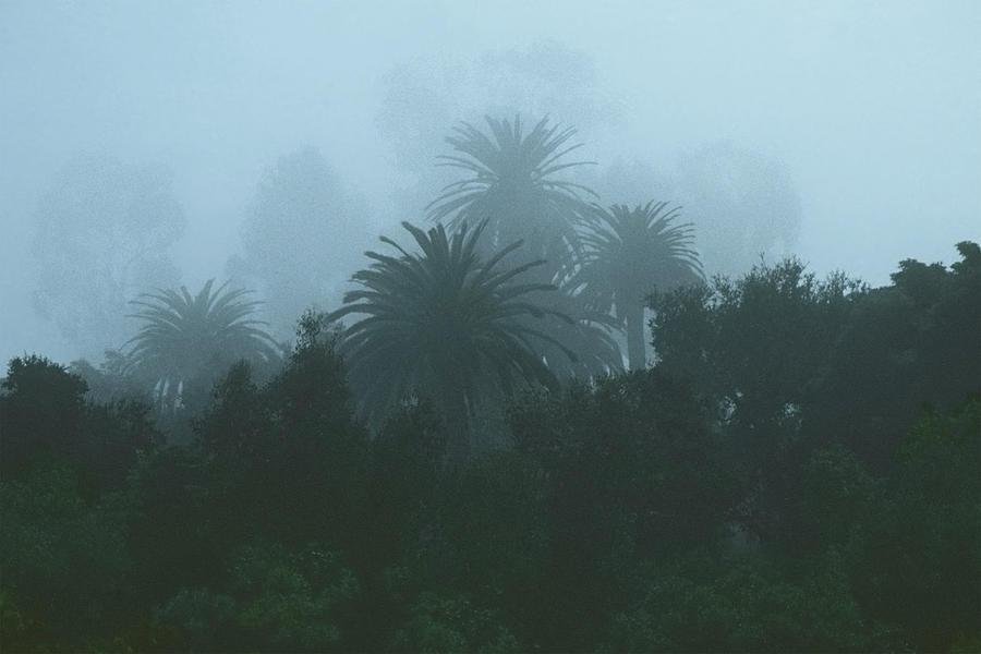 Weatherspeak by The Walkers
