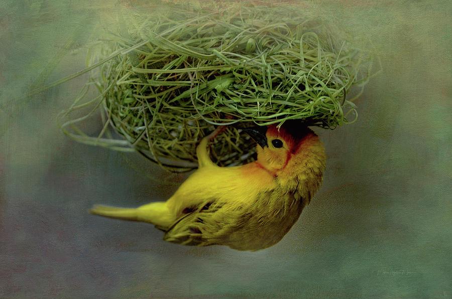 Weaver Bird Building A Nest Photograph By Maria Angelica Maira