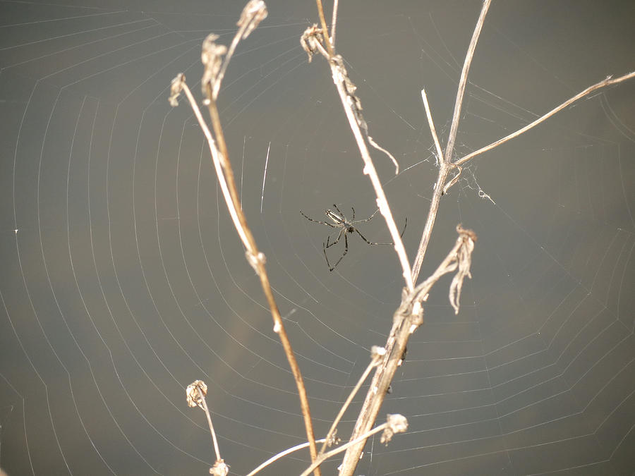 Spider Web Photograph - Web of Wonder by Azthet Photography