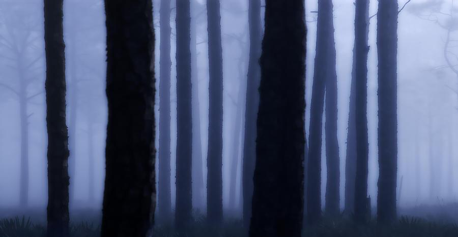 Fog Photograph - Blue Fog  by Perry James