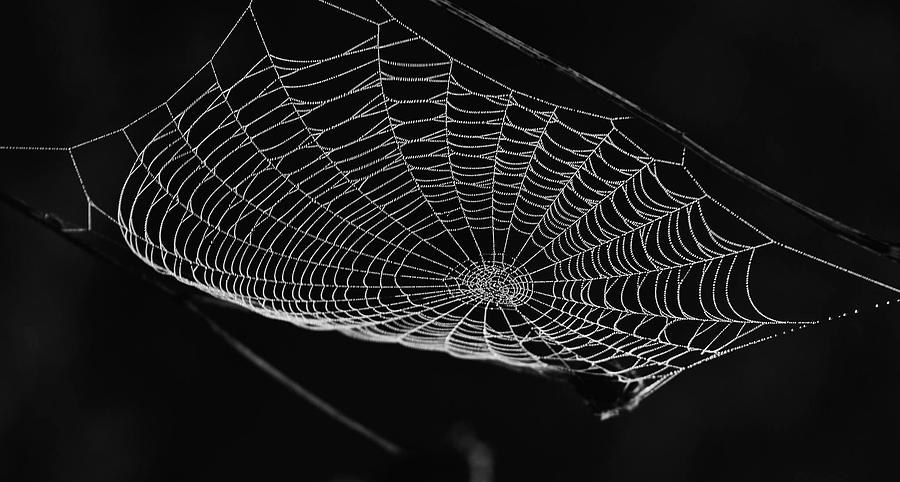 Webbed Photograph by James Caine
