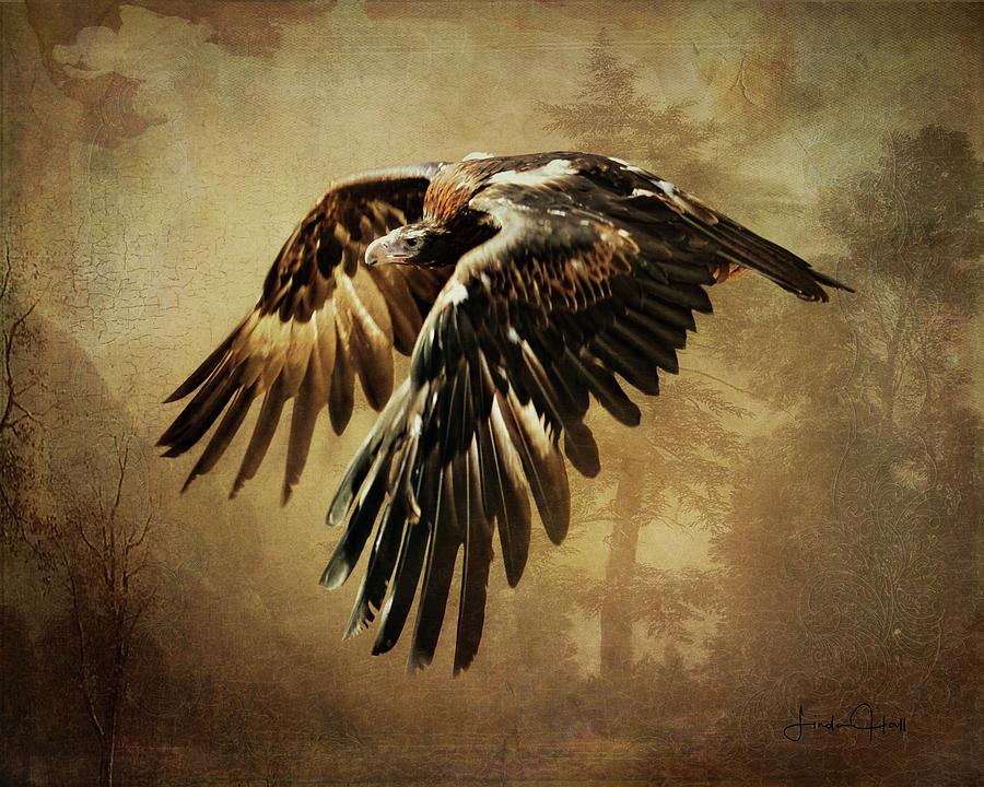 Brown Digital Art - Wedge-Tailed Eagle by Linda Lee Hall