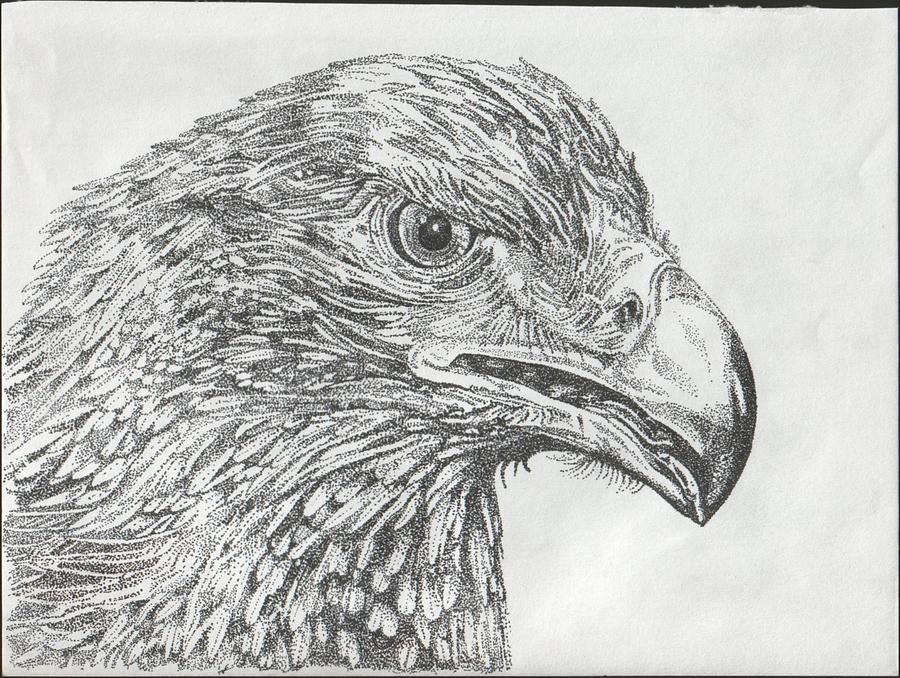 Eagle Drawing - Wedgetail Eagle by Leonie Bell