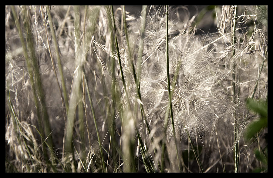 Weeds Photograph - Weeds #1 - 310061 by TNT Images