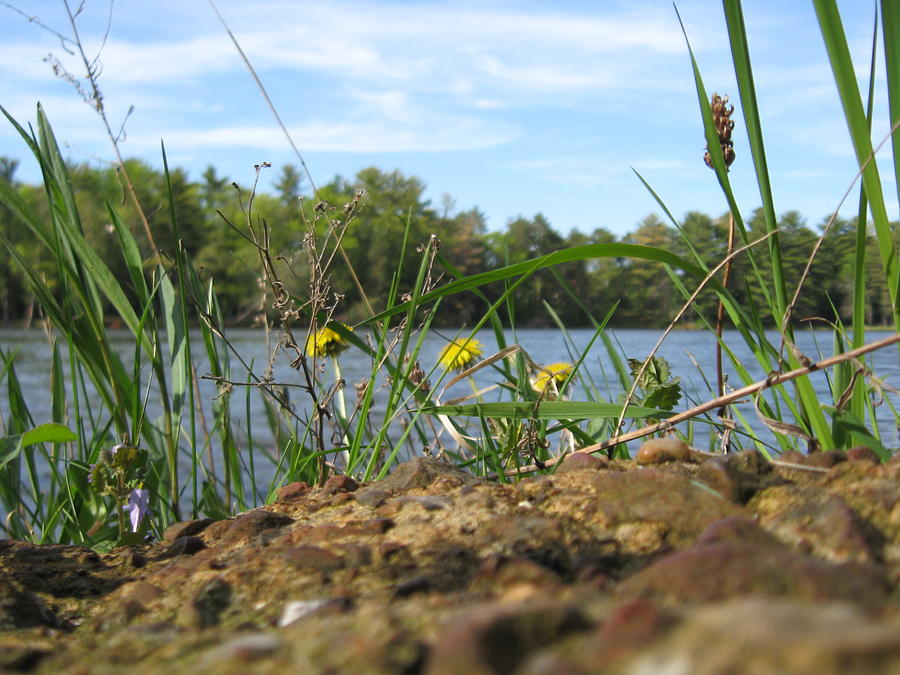 River Photograph - Weeds With A View by Shelia Howe
