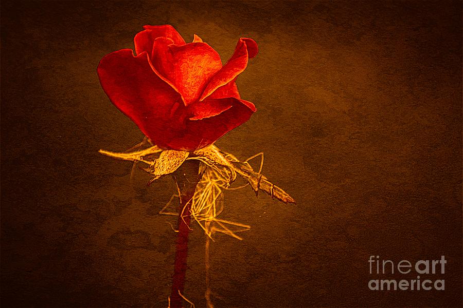 Rose Photograph - Weekend Rose by Gaby Swanson