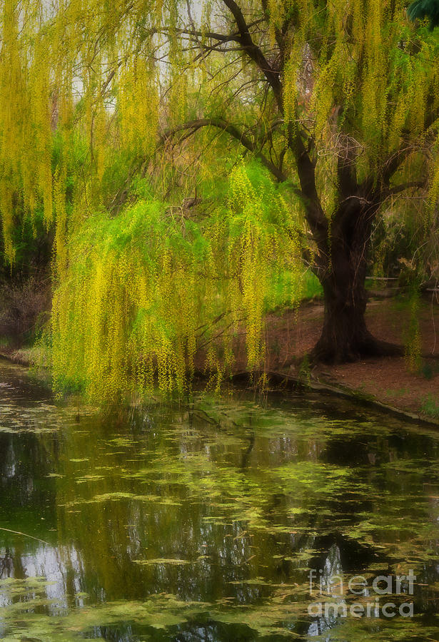 Botanica Photograph - Weeping Pond by Fred Lassmann