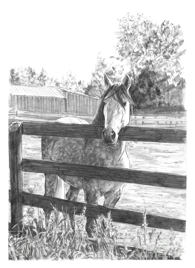Horse Drawing - Welcome Home by Brandy Woods