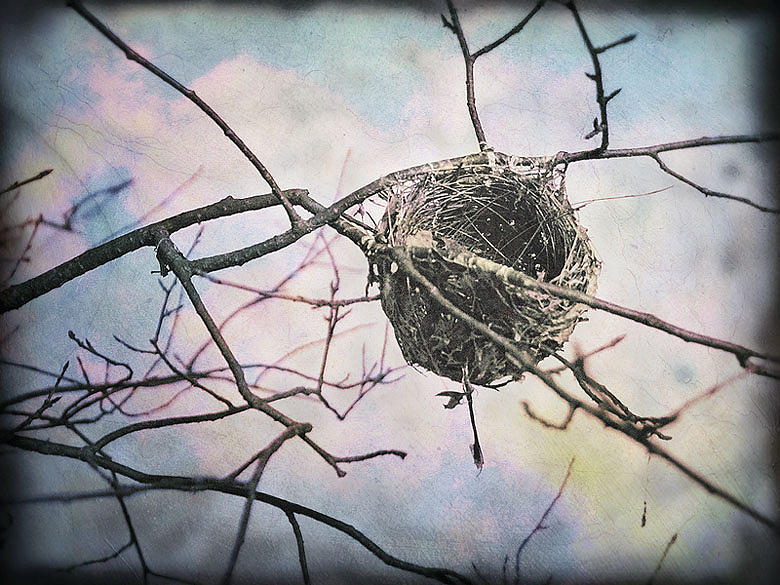 Nest Photograph - Welcome by Paul Bracey