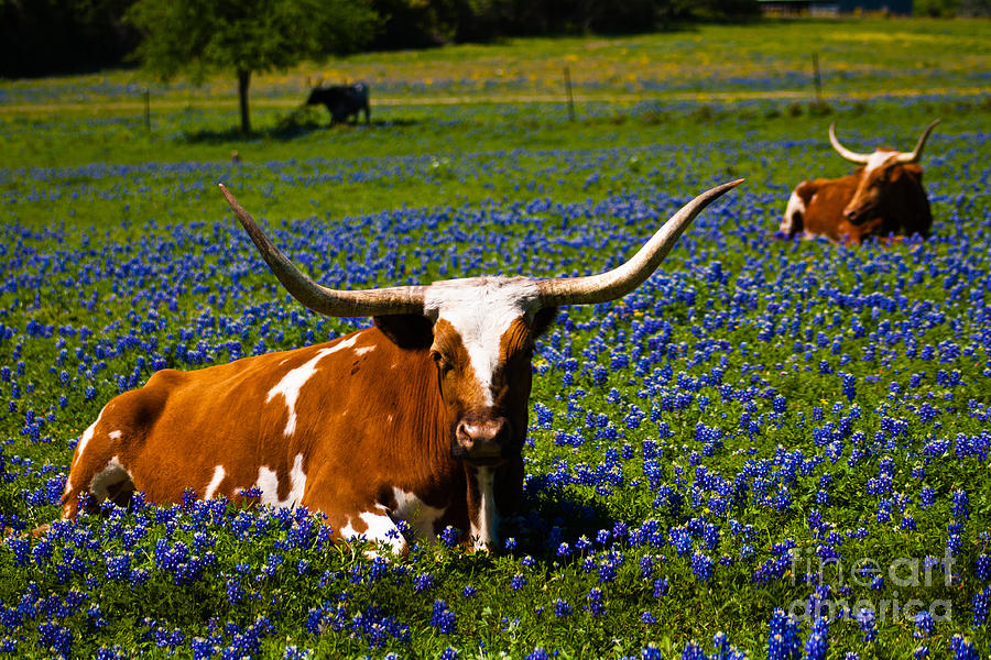 Texas Photograph - Welcome To Texas by John Stanisich