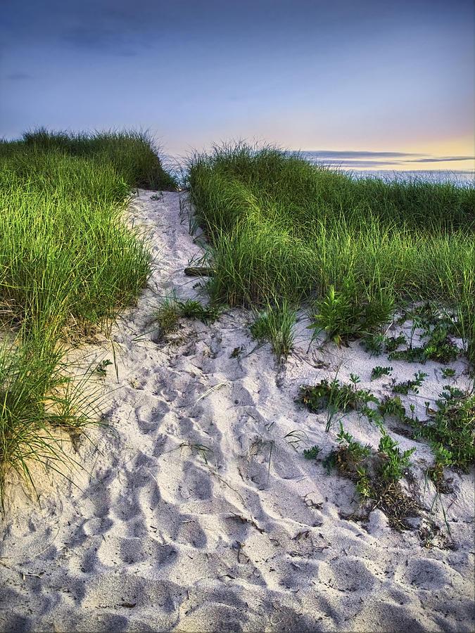 Beach Photograph - Wellfleet Beach Path by Tammy Wetzel