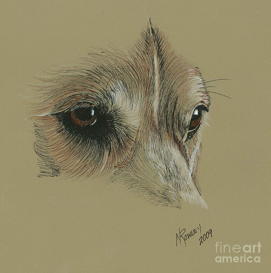 Dogs Drawing - Welsh Corgi Eyes by Norma Rowley
