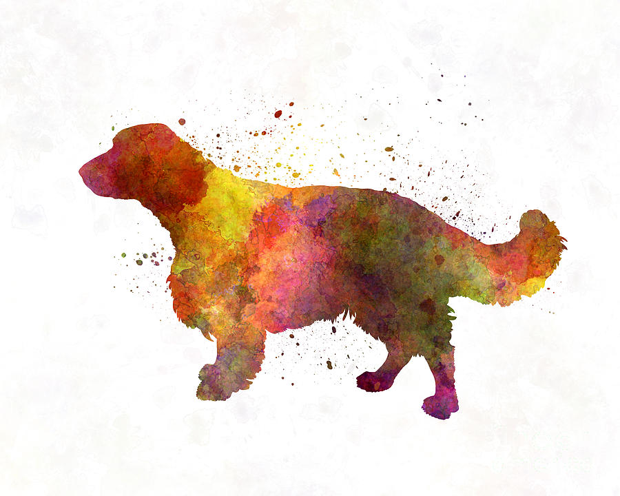 Welsh Painting - Welsh Springer Spaniel In Watercolor by Pablo Romero