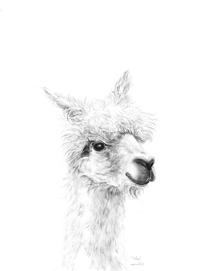 Llamas Drawing - Wes by K Llamas