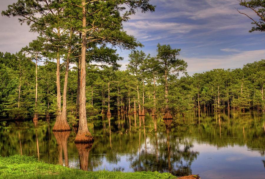 Swamp Photograph - West Monroe Bayou by Ester McGuire