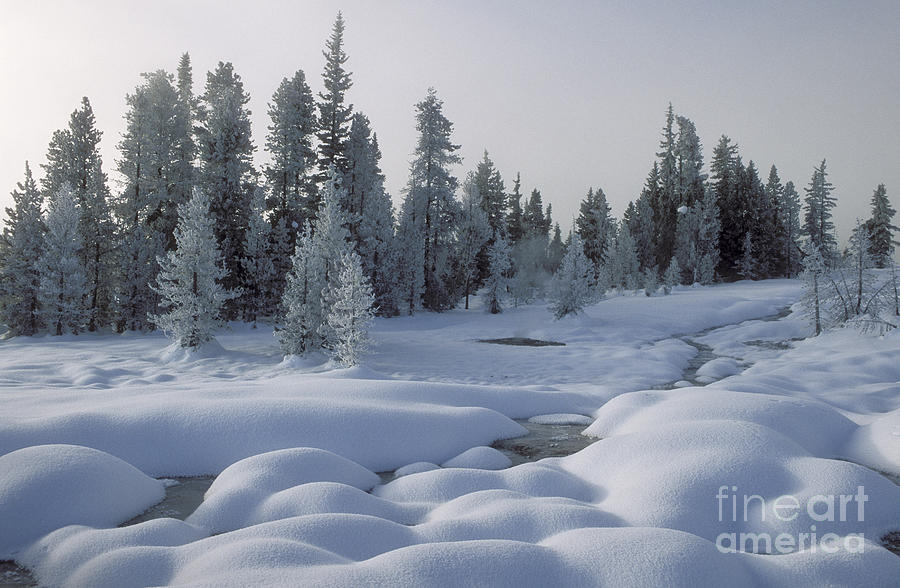Yellowstone Photograph - West Thumb Snow Pillows by Sandra Bronstein