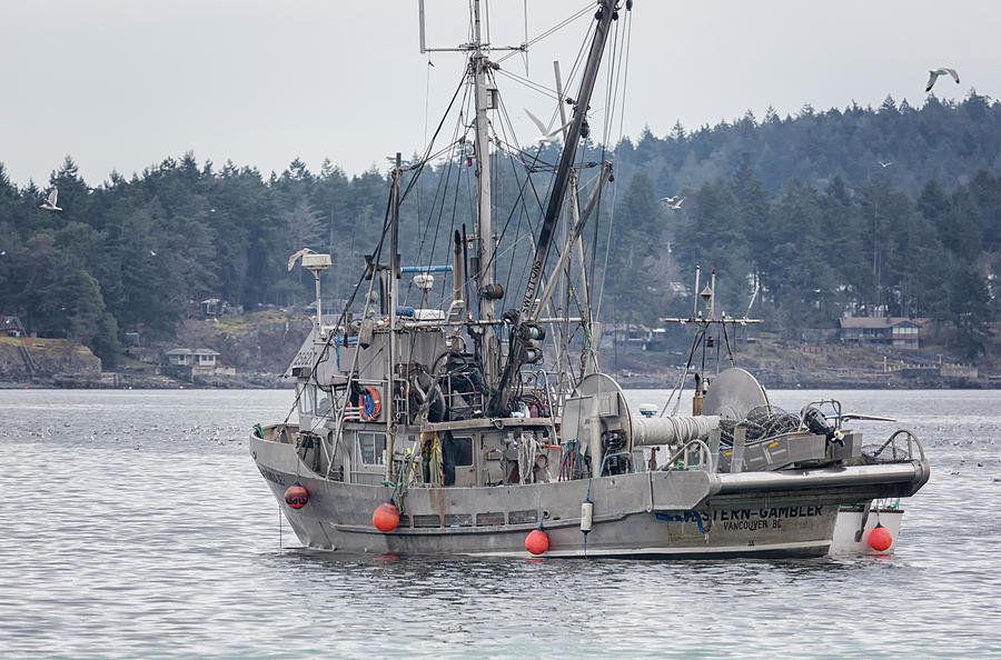 Seiner Photograph - Western Gambler In Nw Bay by Randy Hall