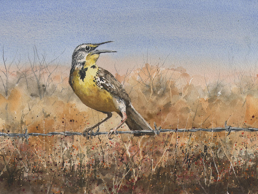 Bird Painting - Western Meadowlark by Sam Sidders