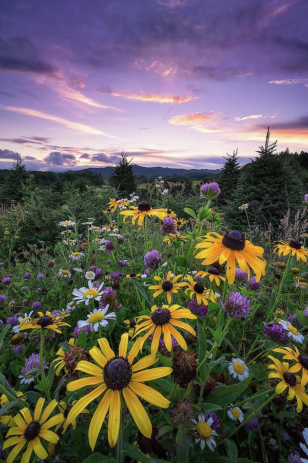 Western North Carolina Photograph - Western North Carolina - Fading Petals by Jason Penland