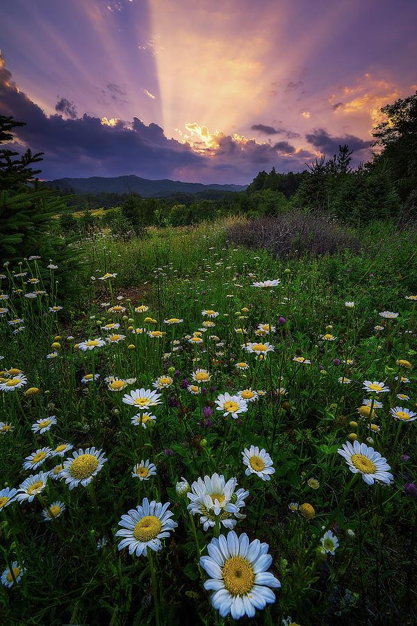Daisy Photograph - Western North Carolina - Life Elevated by Jason Penland