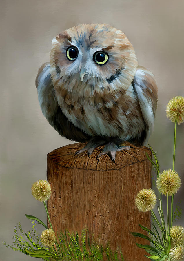 Western Screech Owl Digital Art by Thanh Thuy Nguyen