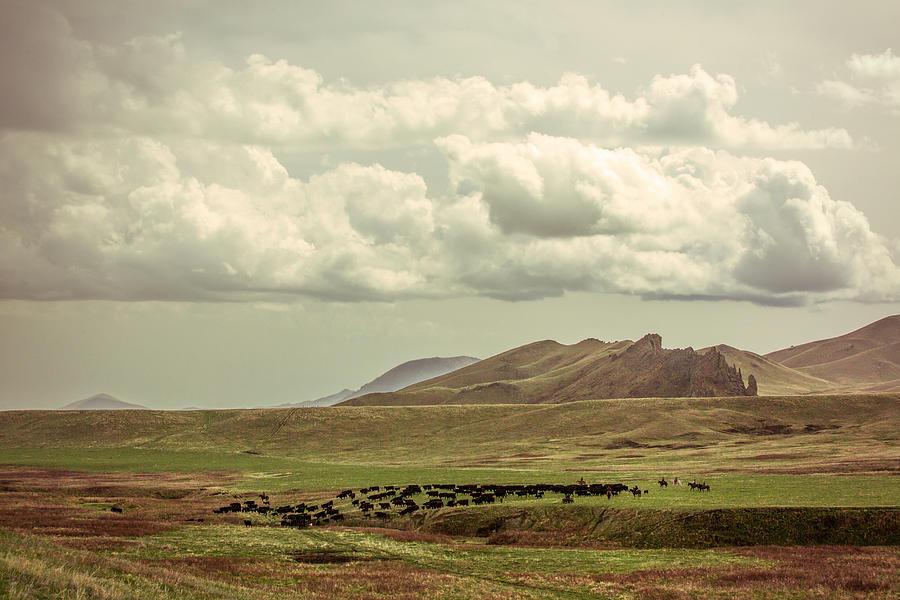 Herd Photograph - Western Storm by Todd Klassy