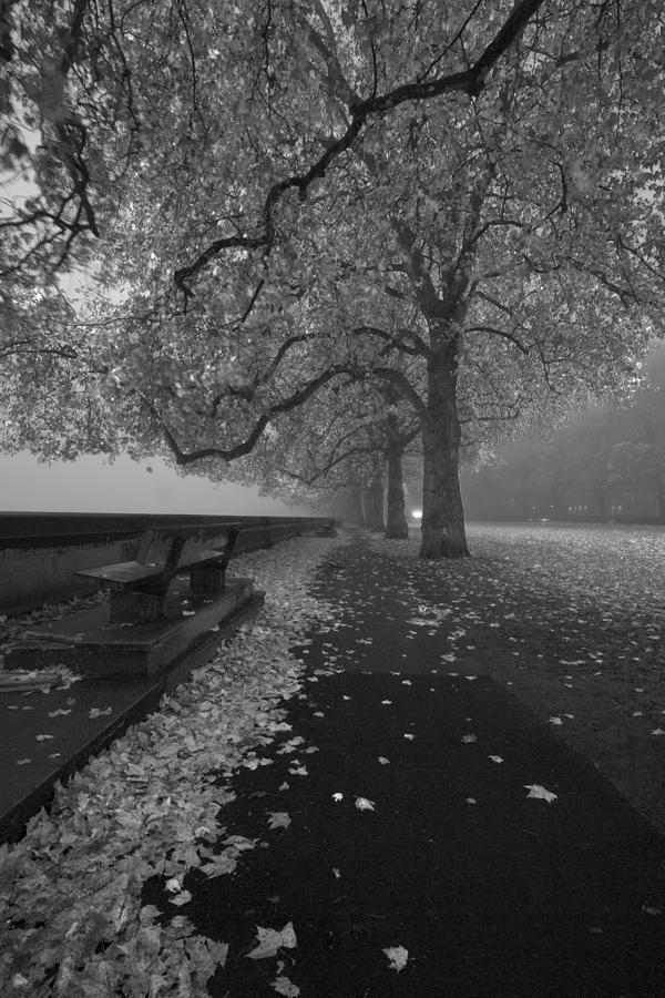 Westminster Misty Trees Photograph